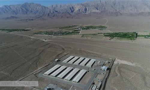 صادرات گوشت مرغ راهحل برون رفت از بحرانهای صنعت مرغداری
